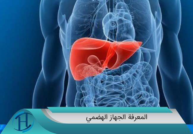 المعرفة الجهاز الهضمي